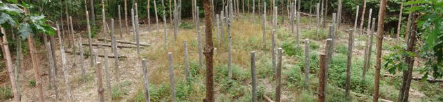 Forest Woodhenge Fall Equinox Panorama
