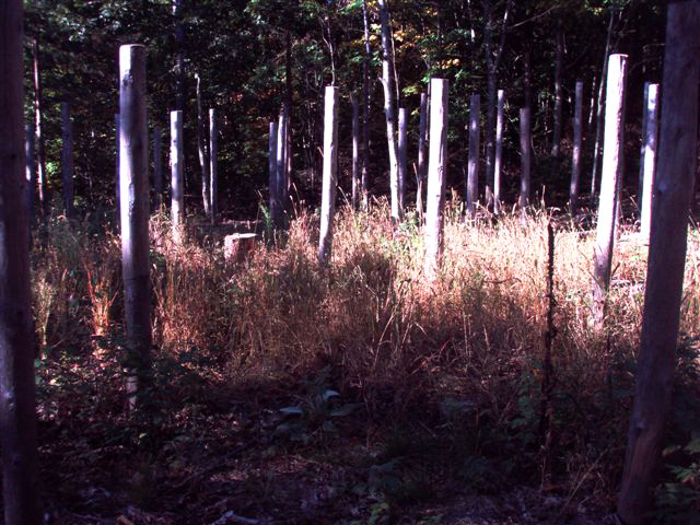 Forest Woodhenge Sept. 24, 2009 (5)