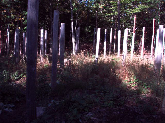 Forest Woodhenge Sept. 24, 2009 (6)