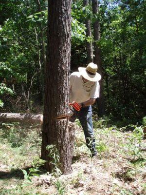 Chain Saw Bill