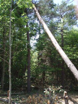 Tree stuck in tree