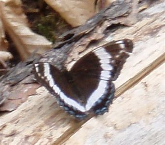 Butterfly rests again