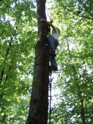 Bill up a tree 2