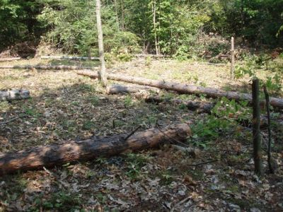 Circle with stumps and logs 2
