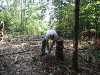 Stubborn Stump