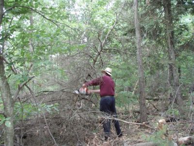 Clearing trees 6