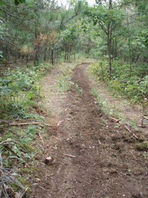 Hauling Lumber Trails 2