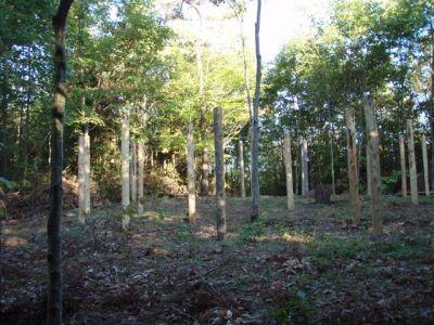 Woodhenge Looking North
