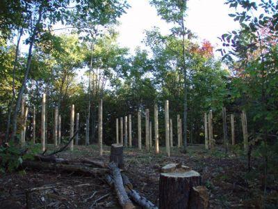 Woodhenge Looking North 2