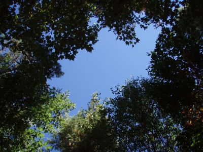 In the Forest - the Canopy Above 4