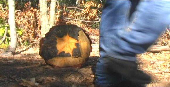 Woodhenge Ceremony - Passing the Star Stump!