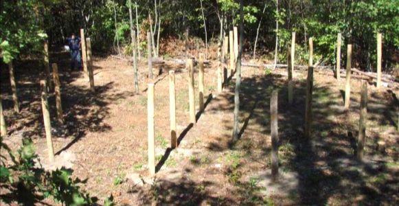 Woodhenge Ceremony True Noon