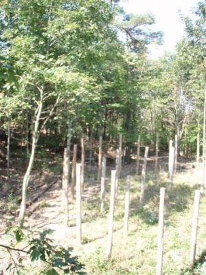 Forest Woodhenge - The Eastern Segment