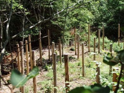 Forest Woodhenge - The Eastern Side!