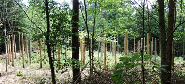 Forest Woodhenge - 5 circles
