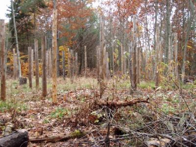 Forest Woodhenge - Scorpio - Looking North