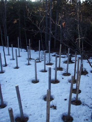 Forest Woodhenge - Spring Equinox - Sunrise - West edge