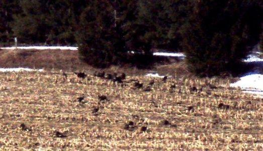 Forest Woodhenge - Spring Equinox - wild-turkeys
