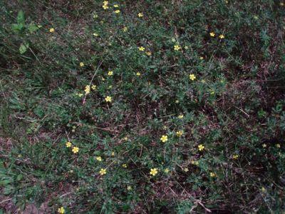 Forest Woodhenge flowers (5)