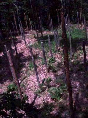 Forest Woodhenge - True Noon