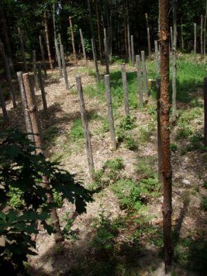 Forest Woodhenge - True Noon (3)