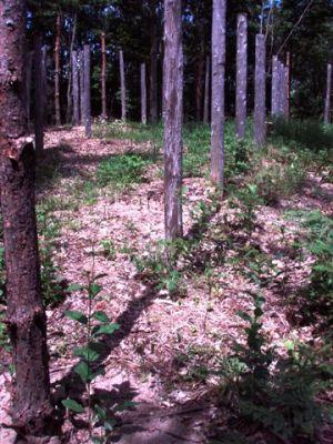 Forest Woodhenge - True Noon (4)