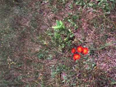 Forest Woodhenge - Flowers (2)