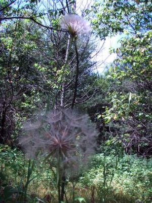 Forest Woodhenge - Flowers (4)