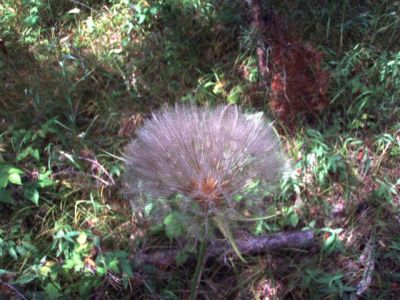 Forest Woodhenge - Flowers (5)