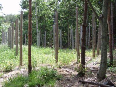 Forest Woodhenge - Midsummer-South