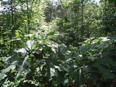 Forest Woodhenge - Midsummer (4)