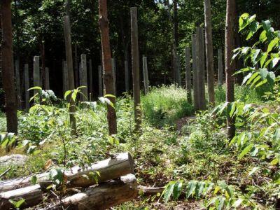 Forest Woodhenge - Midsummer (13)