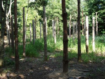 Forest Woodhenge - Midsummer (18)