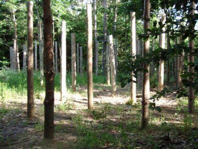Forest Woodhenge - Midsummer (19)