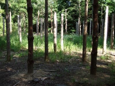 Forest Woodhenge - Midsummer (20)
