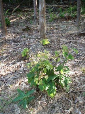 Forest Woodhenge - Midsummer (21)