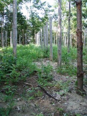 Forest Woodhenge - Midsummer (22)