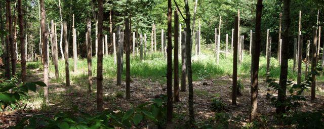 Forest Woodhenge - Midsummer!