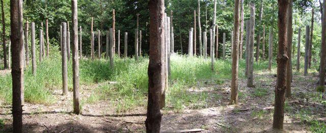 Forest Woodhenge - Midsummer!!!