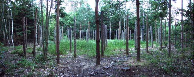 Forest Woodhenge Panorama