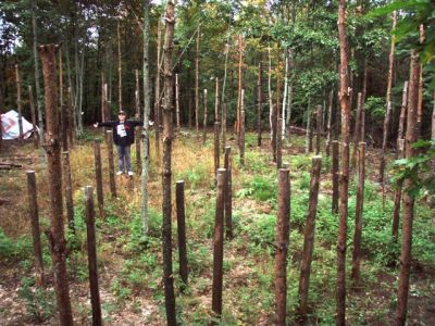 Forest Woodhenge Complete (2) Jesse Footit
