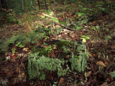 Forest Wonders: Moss Covered Stump (5)