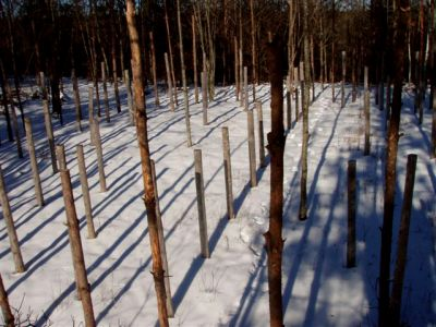 Forest Woodhenge: Winter Solstice: True Noon