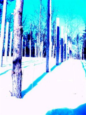 Forest Woodhenge: Winter Solstice: True Noon (4)