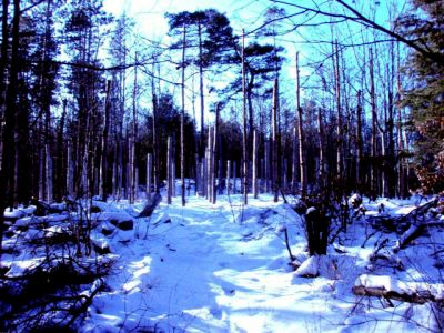 Forest Woodhenge - Winter Solstice - Approach
