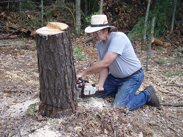 Bill removing the Stump