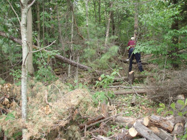 Clearing trees 7