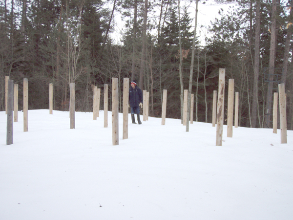 Forest Woodhenge - Grif at the centre