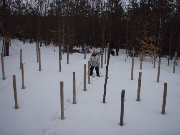 Forest Woodhenge - Robin Armstrong-Spring Equinox 2