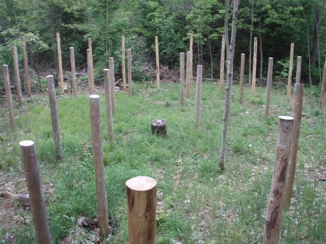 Forest Woodhenge - the Centre view